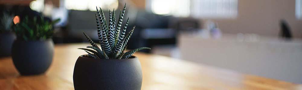 Tischpflanzen-Adecco-Blog-Beste-Azubis